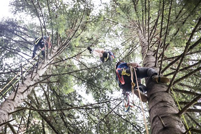 Jeder Erntehelfer absolviert vor der Erntesaison ein 5-tägiges Klettertraining. © toom