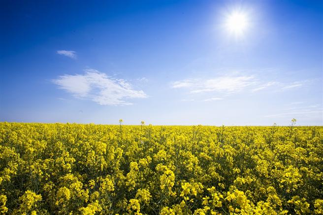 © VDB - Verband der Deutschen Biokraftstoffindustrie e.V.