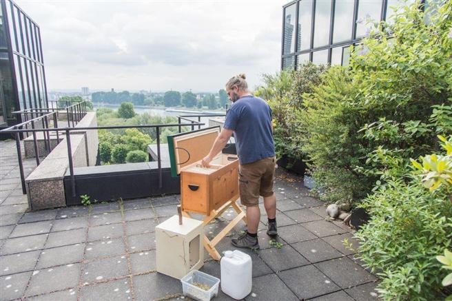 Imker Sebastian Klein baut die Bienenboxen auf der DEVK Zentrale auf – mit Blick auf den Rhein. © DEVK