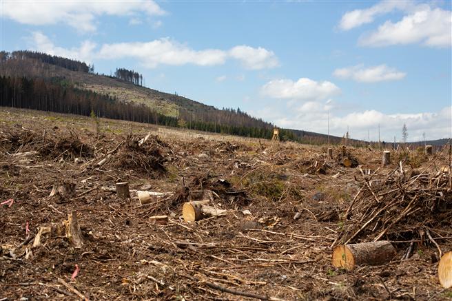 Die Schäden des Stadtwaldes Wernigerode im Harz stellen nicht nur einen wirtschaftlichen Verlust dar, auch für Touristen und Einheimische ist der Anblick erschreckend. © PEFC Deutschland/Ina Maslok