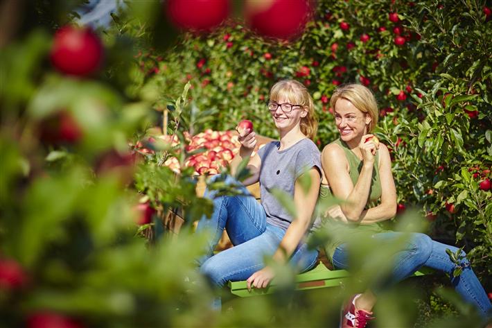 Äpfel aus deutschem Anbau sind nicht nur lecker und gesund. Sie sind auch deutlich besser fürs Klima als importierte Ware. Das belegt eine aktuelle Studie des ifeu-Instituts. © GMH