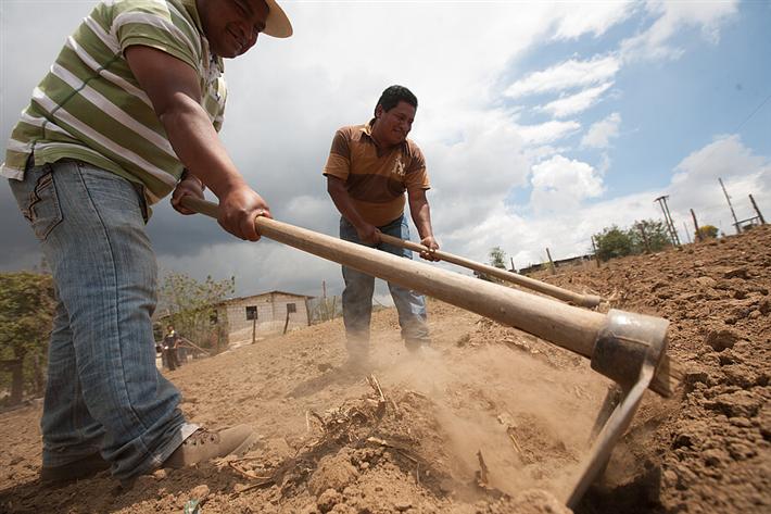 Der Klimawandel stellt vor allem Kleinbauernfamilien vor große Herausforderungen. Er begünstigt Schädlinge und Krankheiten wie den Kaffeerost. © Sean Hawkey, Fairtrade