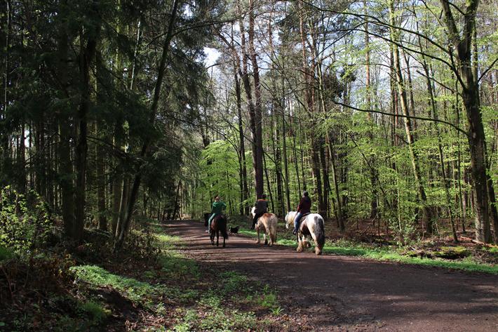 Der Wald ist für Reiter und Spaziergänger ein willkommener Freizeitort. © KOLLAXO