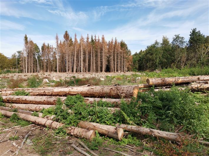 Durch Trockenheit geschwächte Bäume sind besonders anfällig für Schadinsekten. © Kollaxo