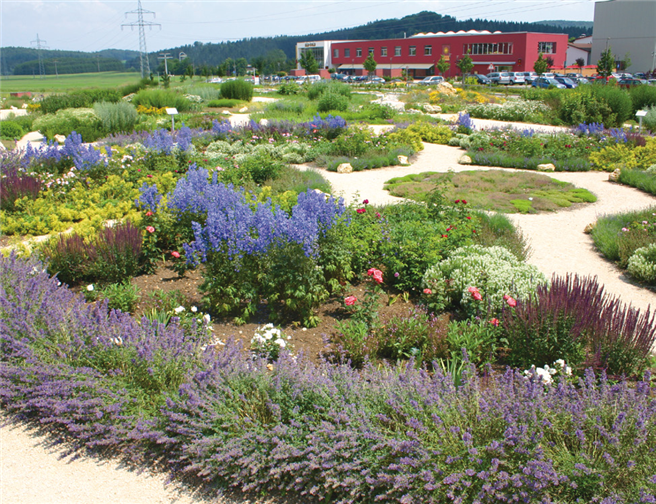 Naturnah gestaltete Fläche der Firma ALB-GOLD Teigwaren GmbH Foto: WILA Bonn e.V.