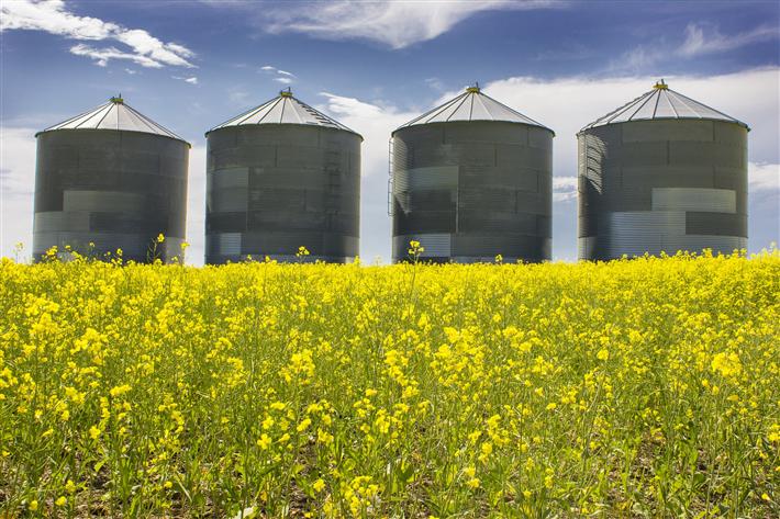 Germanwatch fordert: derzeit verhandelte Gemeinsame Agrarpolitik muss mit Eco-Schemes neu gestaltet werden. © RamonCliff, pixabay